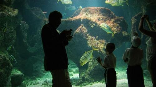 ombre aquarium.jpg