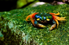 halloween-crab-on-rock-in-costa-rica-photo-poster-print.jpg